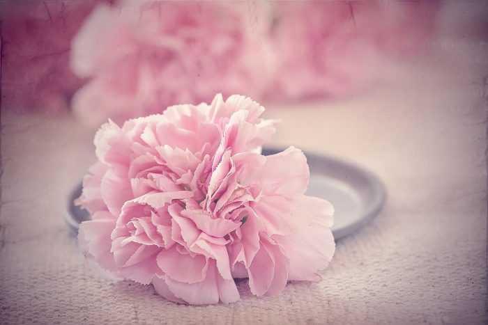 kvetnova svatba