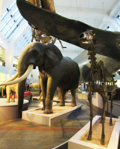 Přírodopisné muzeum