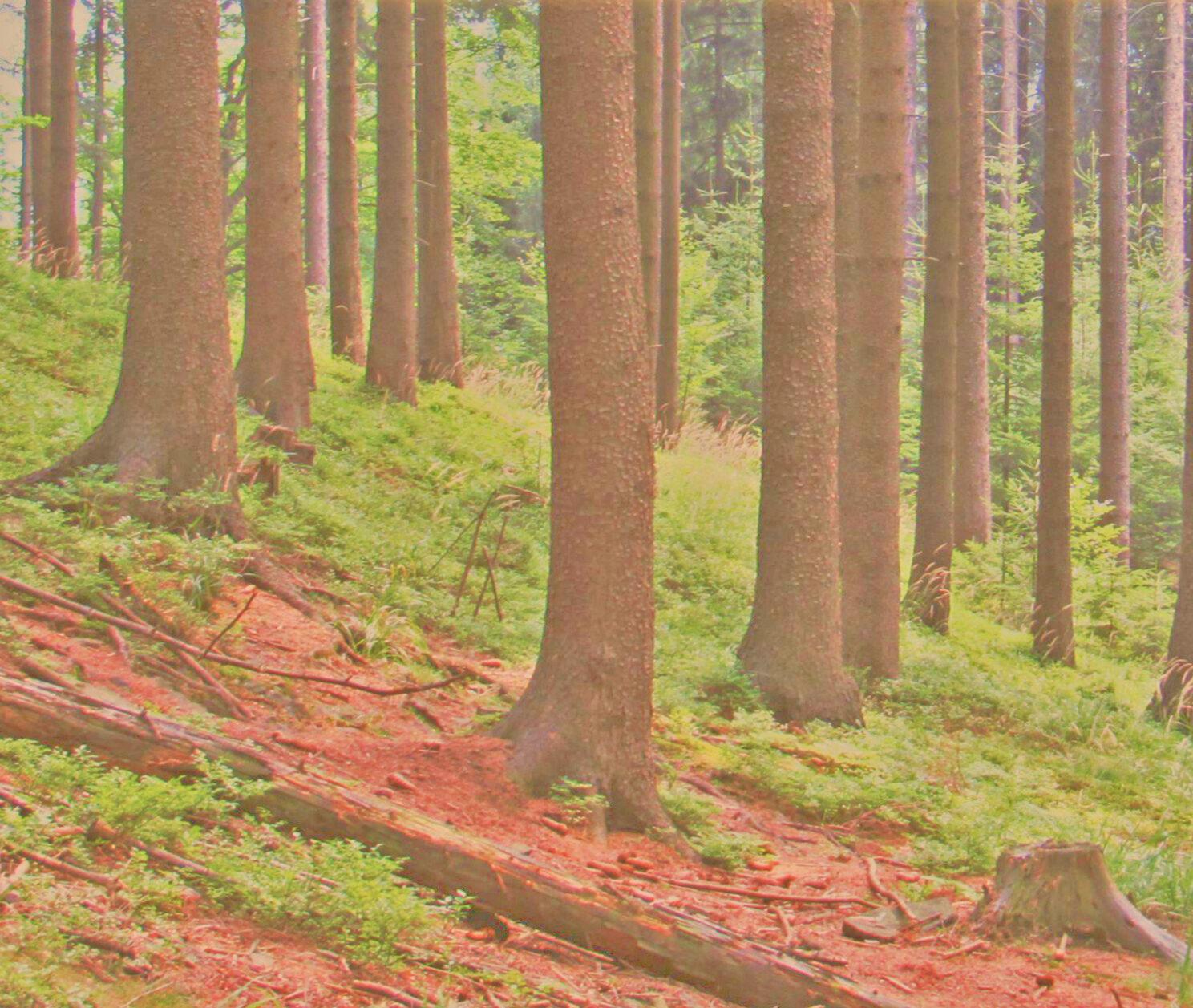 Probuzení v lese